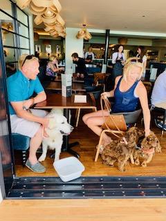 Dog friendly restaurant in Falmouth, Cornwall